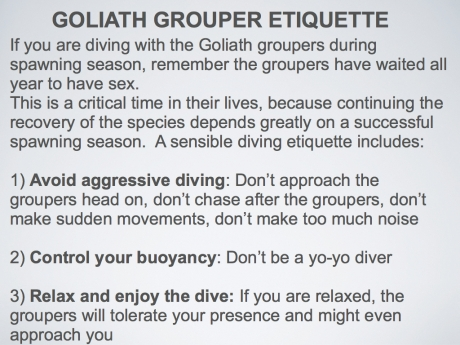 Goliath grouper etiquette.003.003