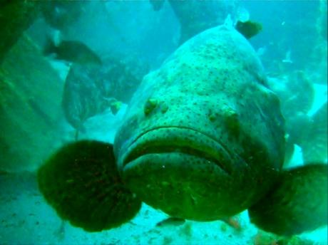 Goliath closeup Sarah FriasTorres jpeg